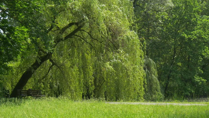 Eye Care Tips: Does Looking at Green Help Ease Myopia?